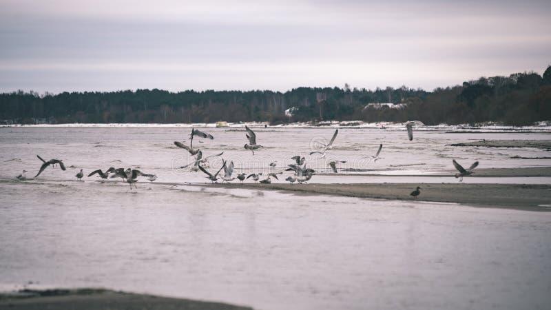 a queda de neve perto do mar no inverno com branco acena o esmagamento - vintage fotografia de stock