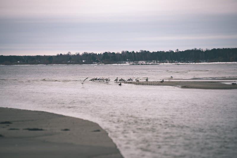 a queda de neve perto do mar no inverno com branco acena o esmagamento - vintage imagem de stock