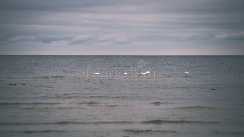 a queda de neve perto do mar no inverno com branco acena o esmagamento - vintage foto de stock royalty free