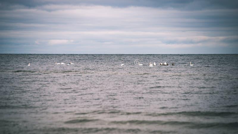 a queda de neve perto do mar no inverno com branco acena o esmagamento - vintage foto de stock