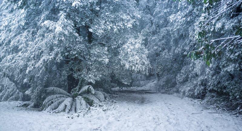 Queda de neve pesada na floresta australiana fotografia de stock royalty free
