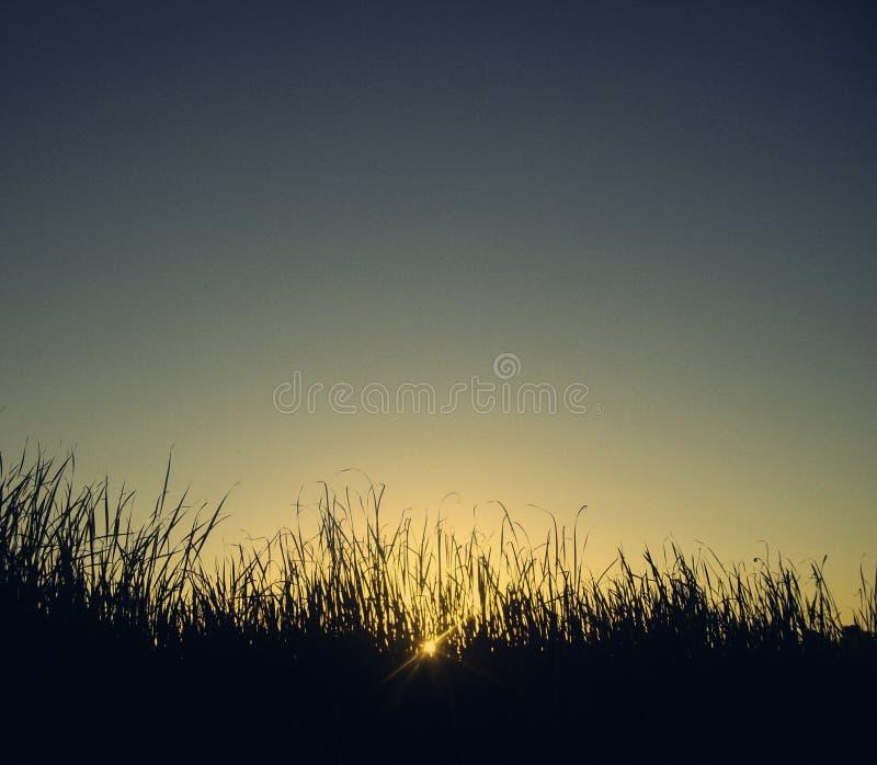 Queda de Sun na grama imagens de stock
