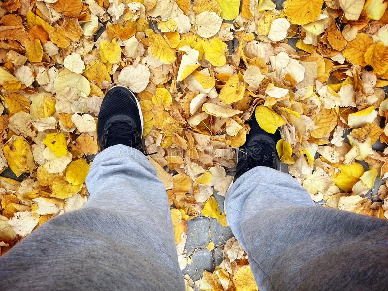 Queda do outono fotos de stock
