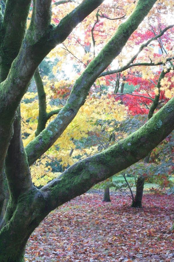 Queda do outono da floresta fotografia de stock royalty free