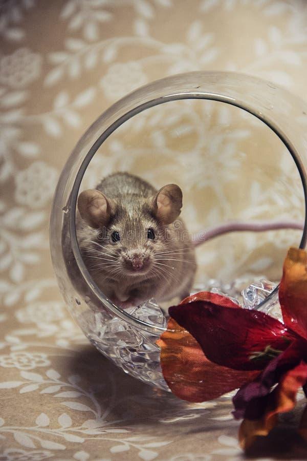 A queda do rato de Brown colore a esfera de vidro foto de stock