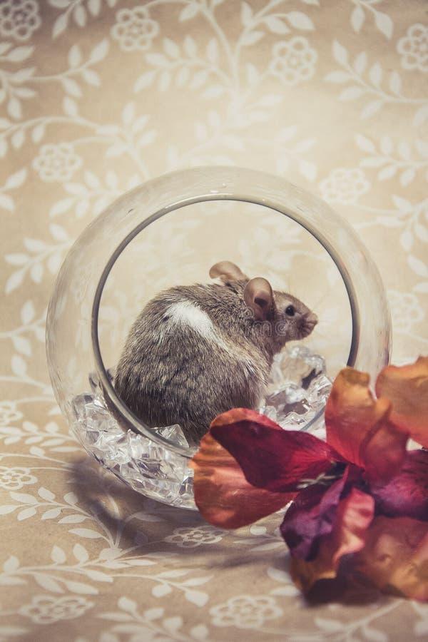 A queda do rato de Brown colore a esfera de vidro imagens de stock