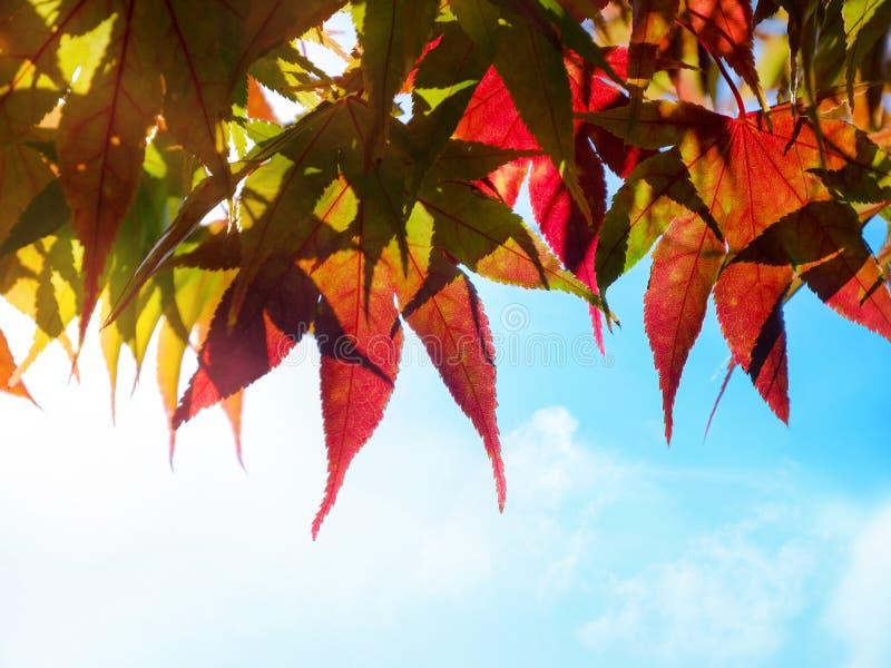 A queda e Autumn Season Concept, olhar acima do céu dispararam, close up imagem de stock