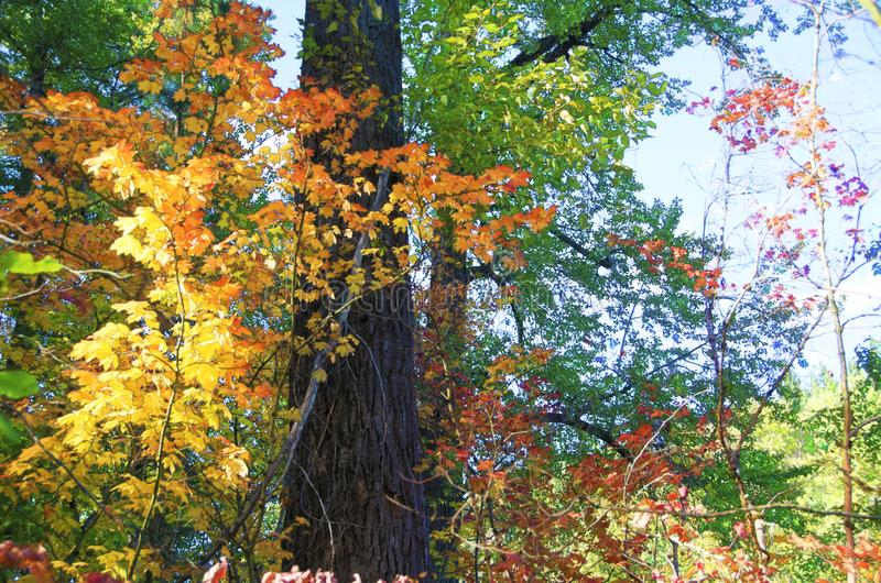 Queda na floresta foto de stock royalty free