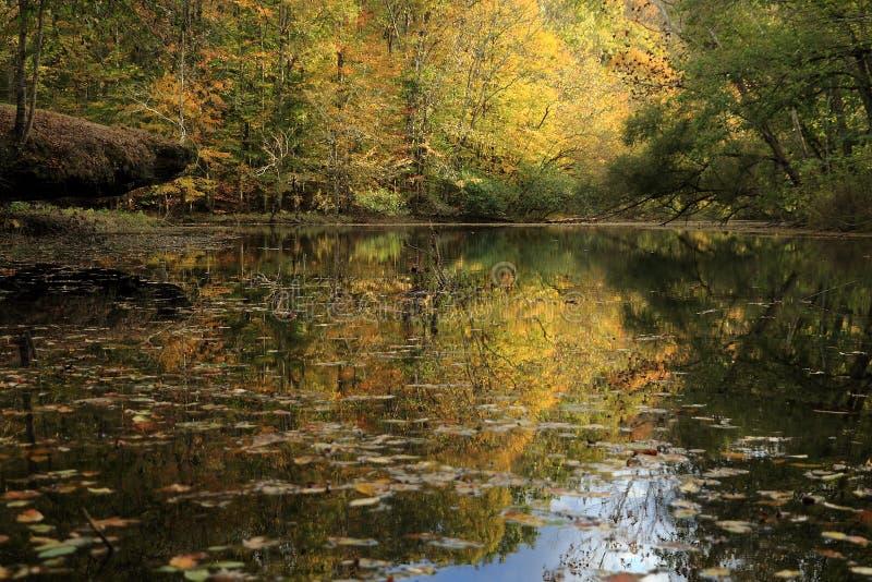 Queda no rio do caneyfork imagem de stock royalty free