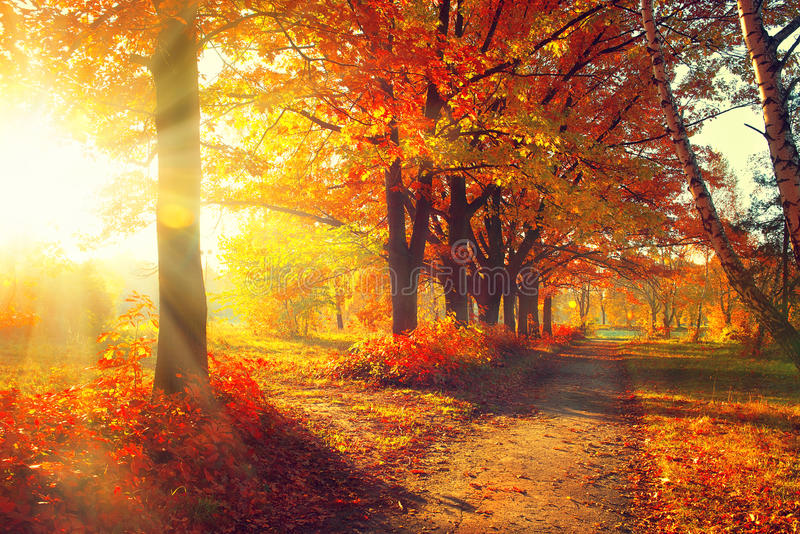 Queda Parque do outono imagens de stock royalty free
