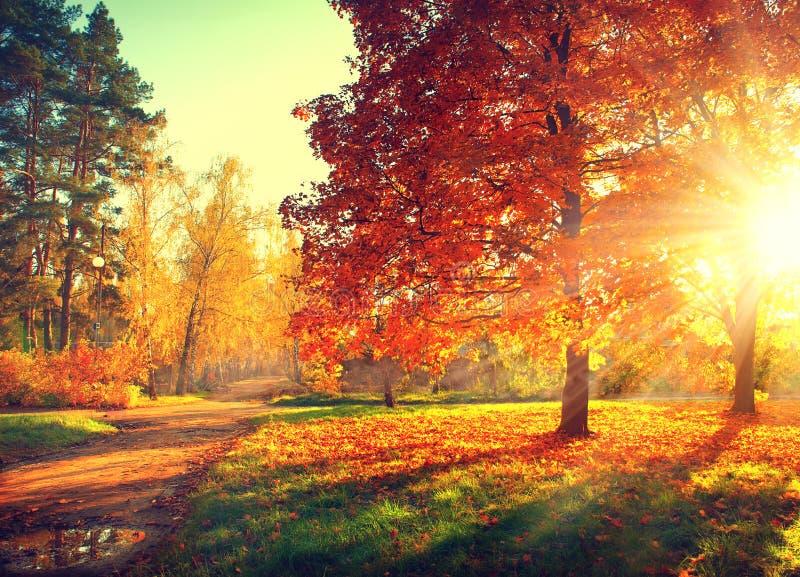 Queda Parque do outono fotografia de stock