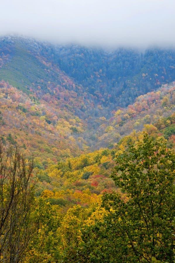 Queda que muda ao inverno em Great Smoky Mountains fotografia de stock royalty free