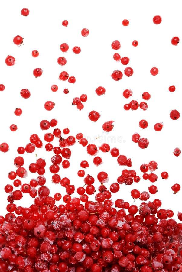 Queda vermelha congelada das bagas fotos de stock
