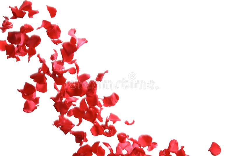 Queda vermelha das pétalas cor-de-rosa foto de stock royalty free