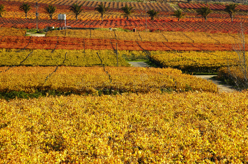 Queda Vineyards16 imagem de stock royalty free