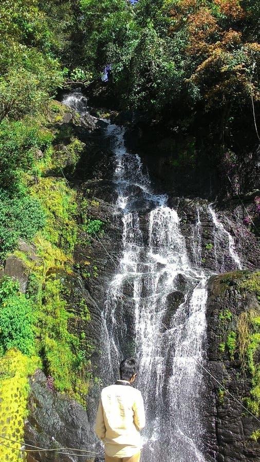 Quedas De água Cercadas Por Plantas Verdes Domínio Público Cc0 Imagem