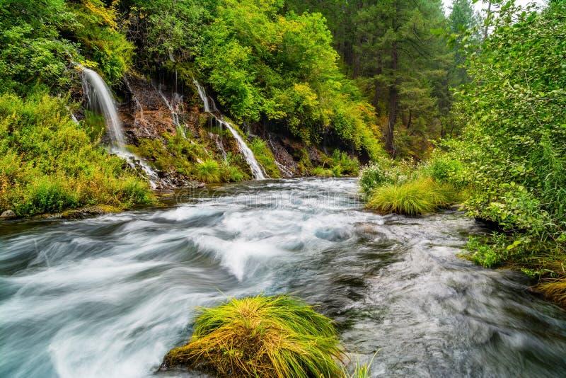 Quedas de água na serena floresta imagem de stock royalty free