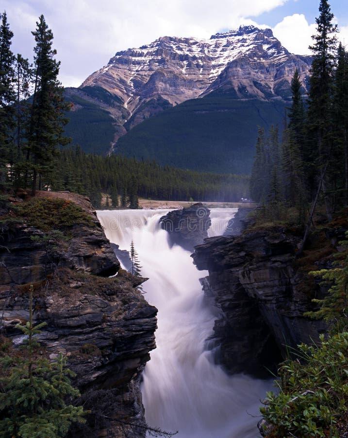 Quedas de Athabasca, Alberta, Canadá. imagens de stock royalty free