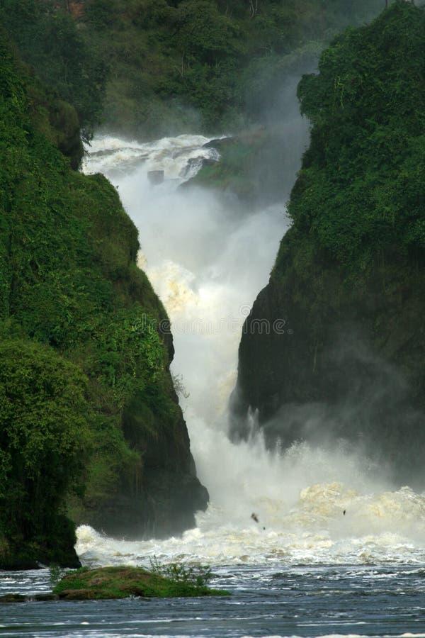 Quedas de Murchison, Uganda imagem de stock