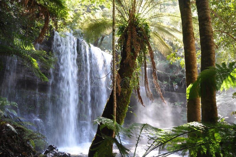 Quedas de Russell, Tasmânia fotos de stock