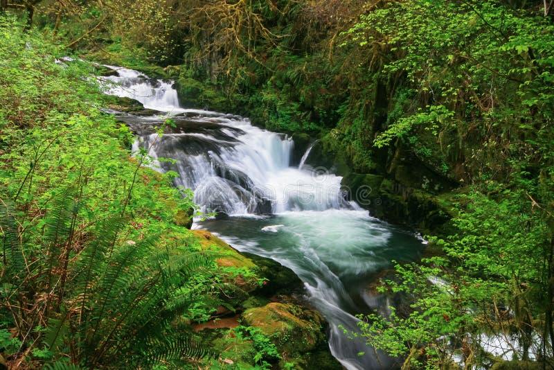 Quedas doces da angra, Oregon foto de stock royalty free