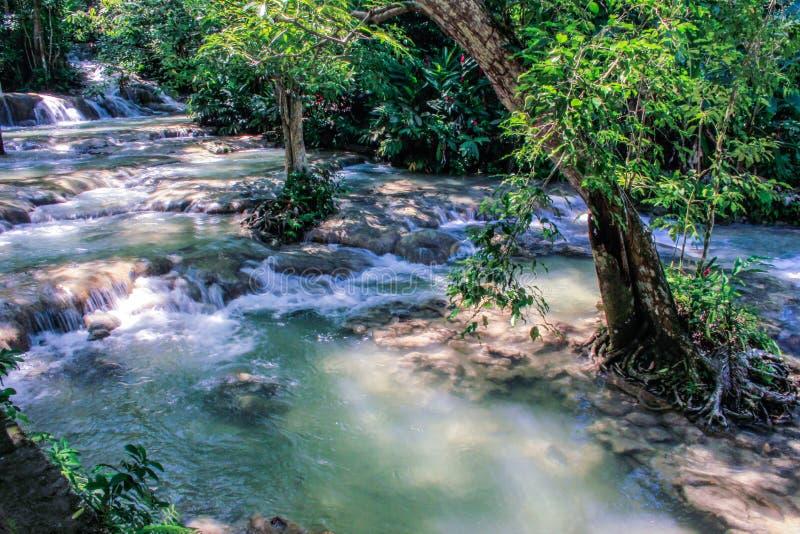 Quedas jamaicanas do rio imagens de stock royalty free