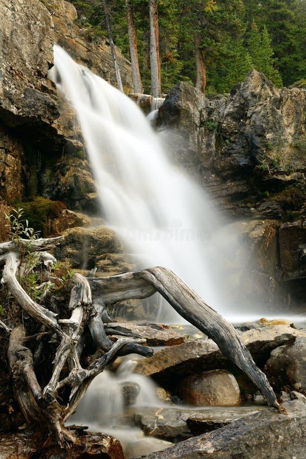 Quedas Jasper National Park da angra do emaranhado imagens de stock