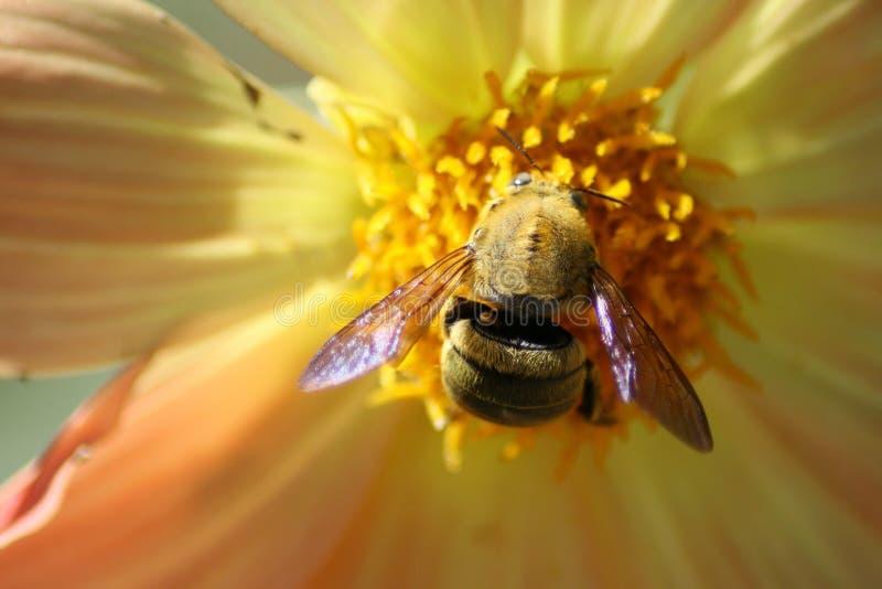 Queen Bee stock photos