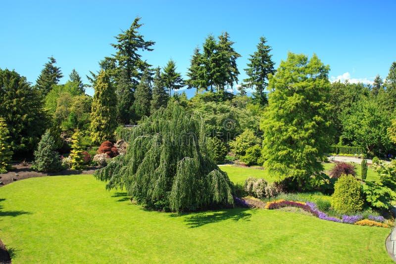 Queen Elizabeth park. Sunny afternoon at Queen Elizabeth park, Vancouver Canada stock photography