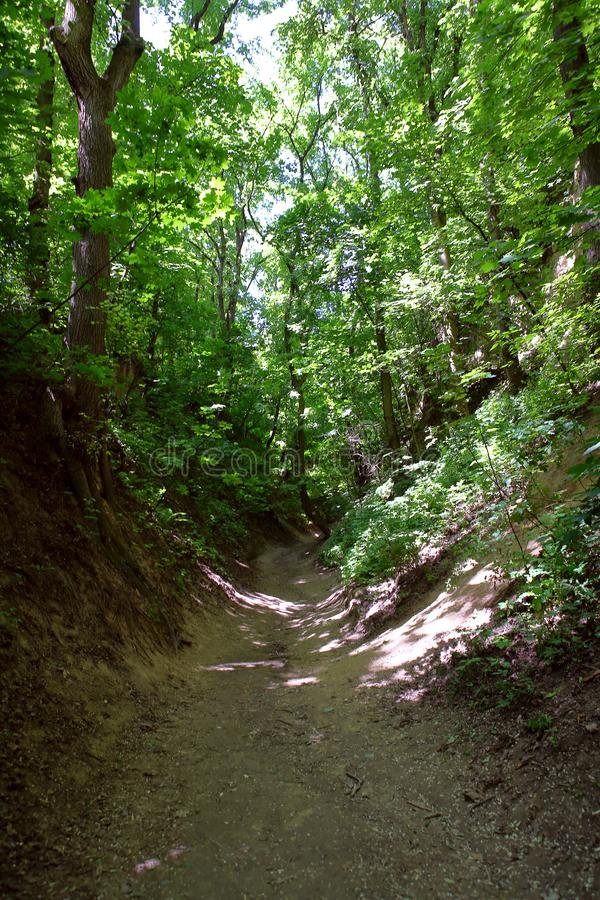 Forest ravine stock photos