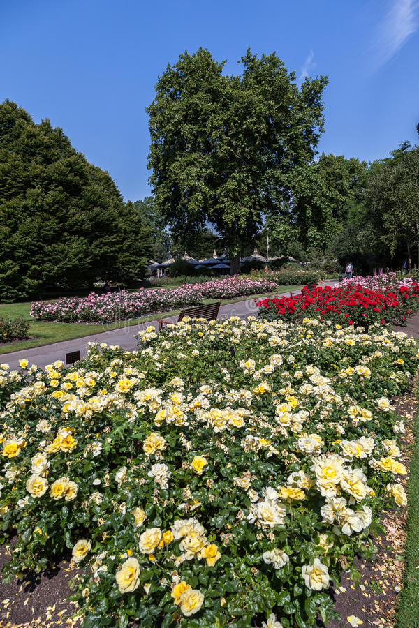Queen Mary ogród Londyn Anglia fotografia royalty free