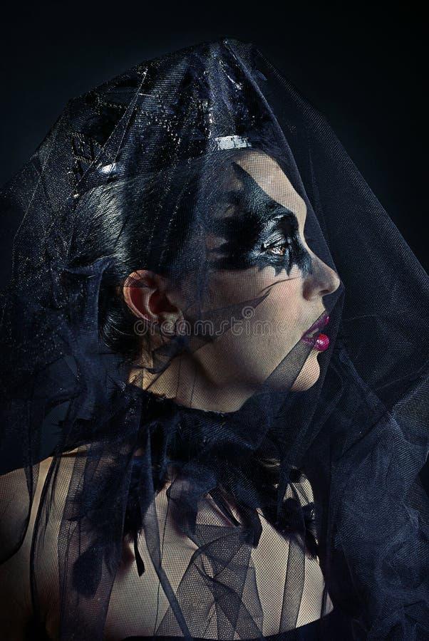 Free Queen Of Black Swans Stock Photos - 37800143
