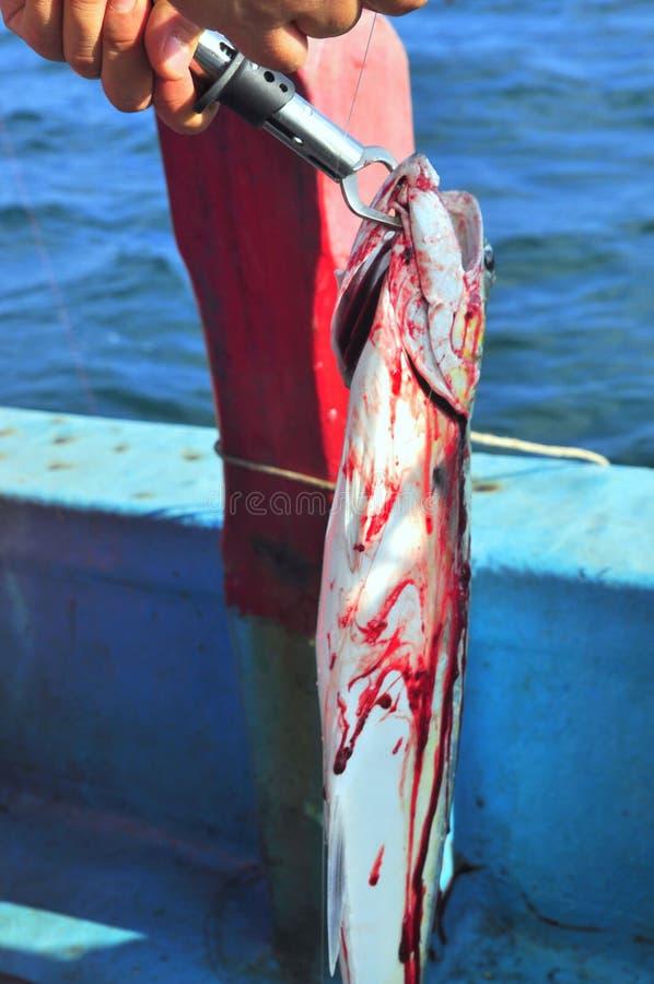 Queenfish wordt vastgehaakt in het overzees stock afbeelding