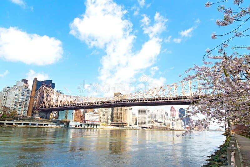Queensborobrug en kersenbloesem de stad over van Manhattan, New York stock afbeeldingen