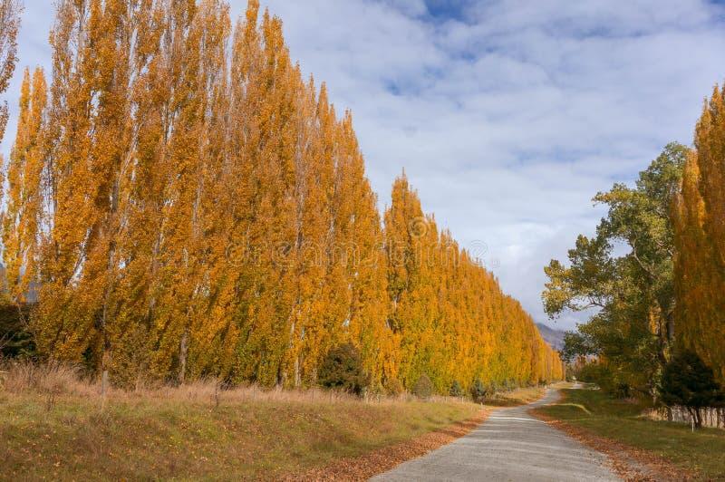 Queenstown et le Nouvelle-Zélande rural en automne image stock