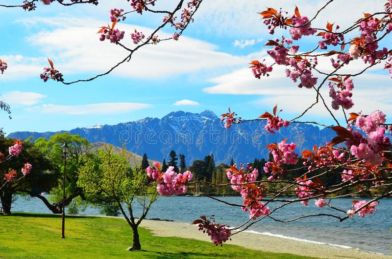 Queenstown New Zealand. Cherry blossom trees in spring flower with Remarkables Mountains backdrop, Lake Wakatipu, Queenstown, Southern Alps, New Zealand stock photography