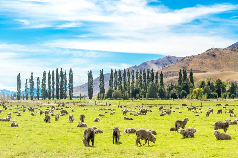 Queenstown in New Zealand. The city of adventure and nature. Amazing Landscape stock photography