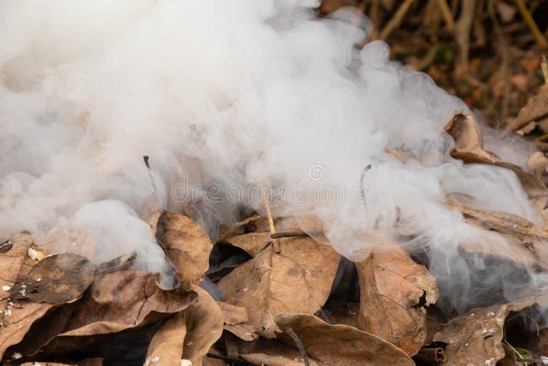 Queimadura do fogo e da cinza das folhas secas imagem de stock