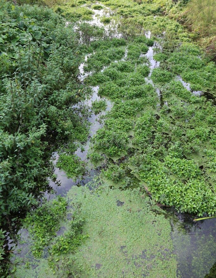 Quelle des Wassers im Sumpf stockbilder