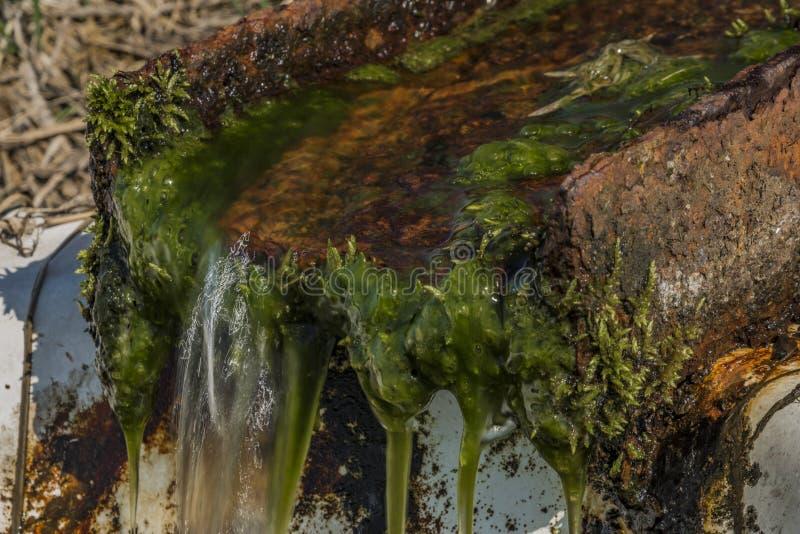Quelle mit Trinkwasser und Bad auf Frühlingswiese lizenzfreies stockbild