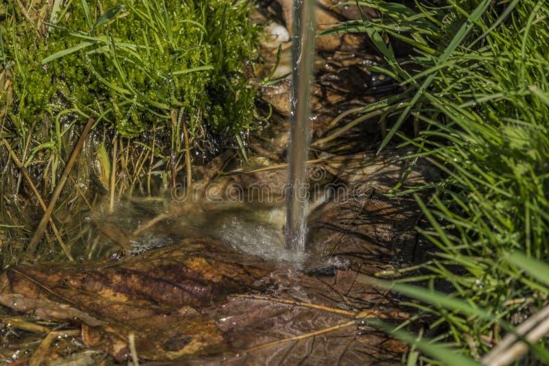 Quelle mit Trinkwasser und Bad auf Frühlingswiese stockbild