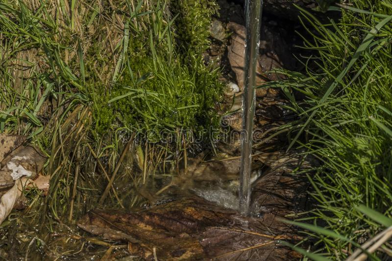 Quelle mit Trinkwasser und Bad auf Frühlingswiese stockfotos