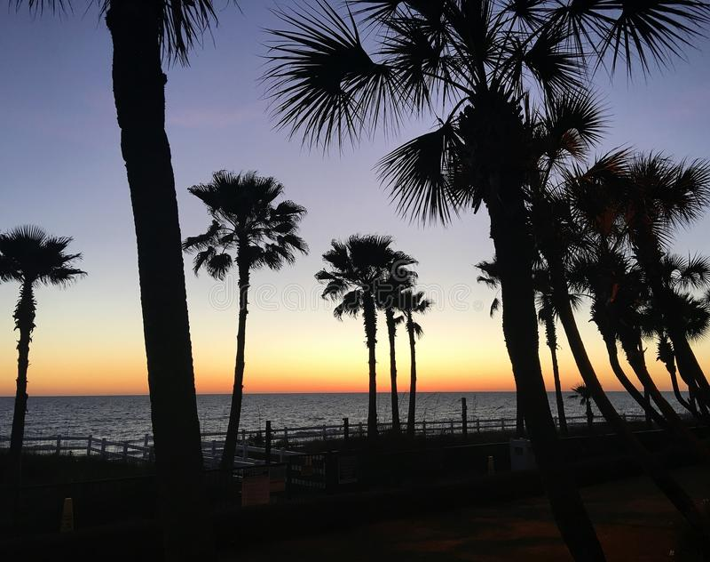 Quelle vue ! Paumes majestueuses sur le Golfe du Mexique au coucher du soleil photo stock