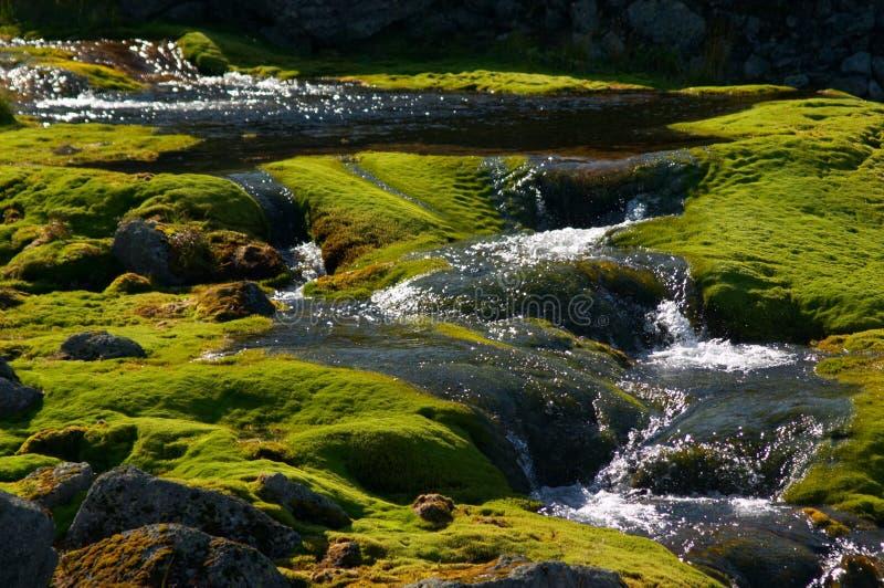 Quellenwasser stockfoto