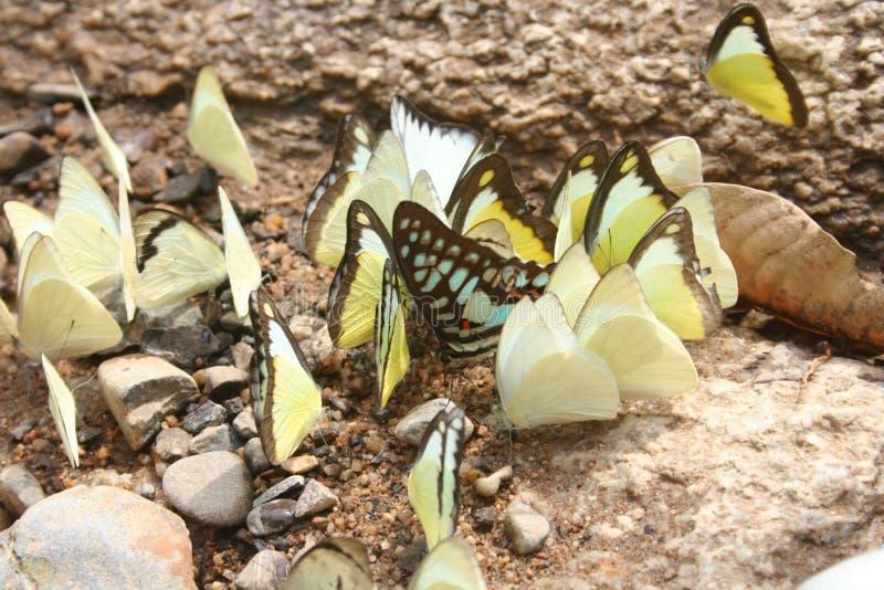 Quello della differenza: Farfalle sociali fotografia stock