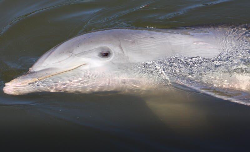 Quello sguardo del delfino immagini stock libere da diritti