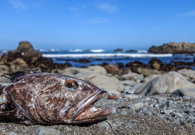 Quelque chose de poisson photos stock