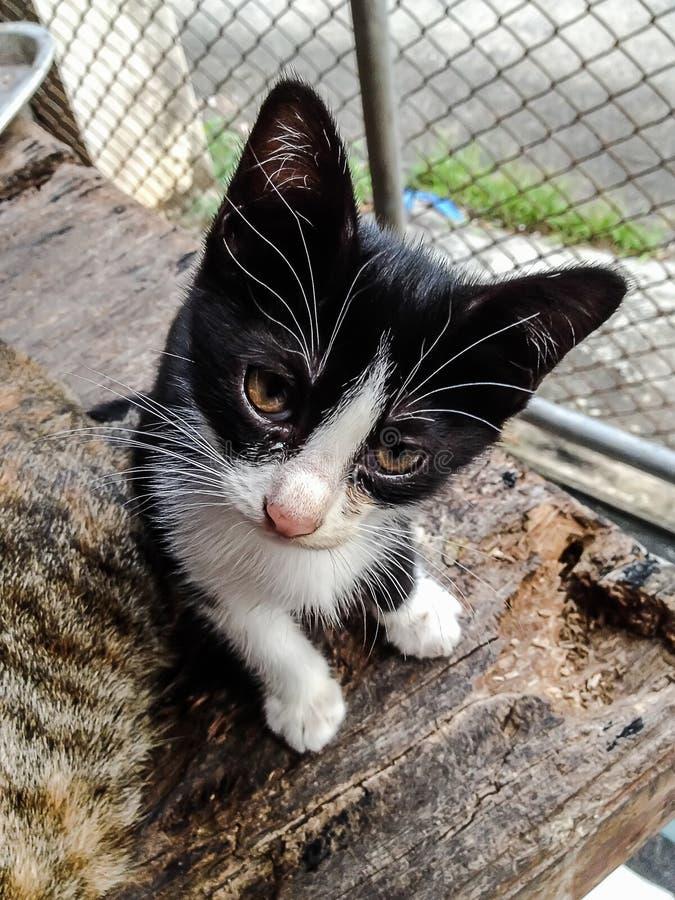 Quelque chose peu commune pour que les chats fixement soient se demander de regarder photographie stock libre de droits