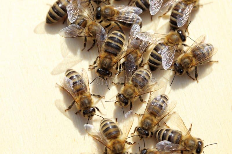 Quelques abeilles équipe-travaillent photo stock