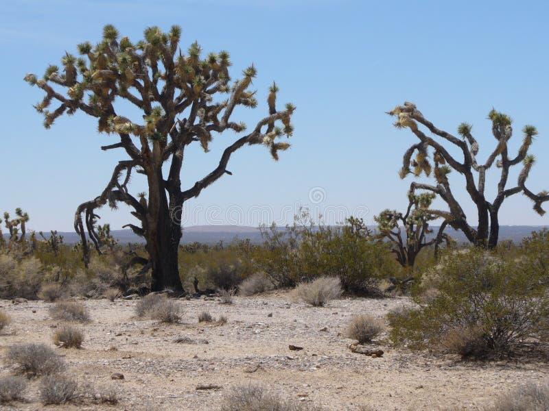 Quelques arbres dans le désert au Nevada image stock